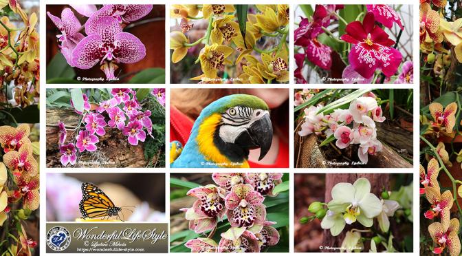 Čudovite Orhideje