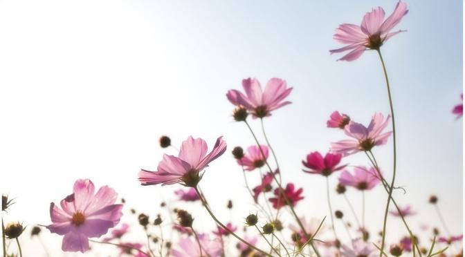 Pomlad v barvah